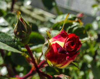 hana_200900501_-1.jpg