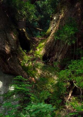 iwadaki20090819_-2.jpg
