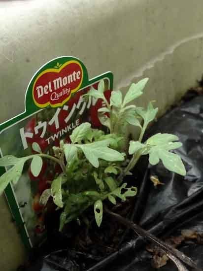 tomato_mini-2.jpg