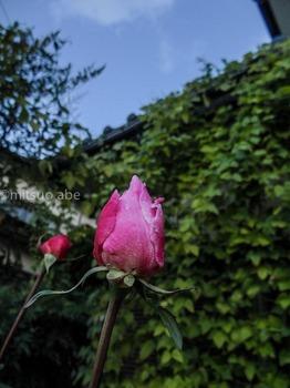 yosi_20121204_-5.jpg