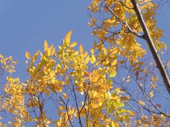 yosikouyou_2012_1110_-23.jpg
