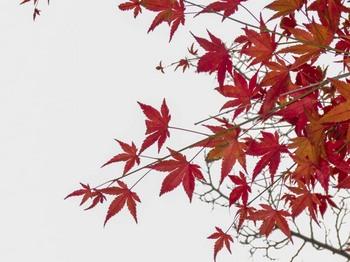 zoukei_2012_1110_-25.jpg